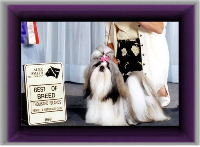 """Can/Am Ch. Beswick's Satan's Choice """"Harley"""" Harley is the dam of BIS/BISS Can/Am Ch. Beswick's Twist and Shout"""