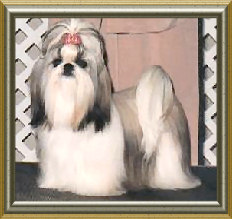 """Can/Am Ch Beswick's It Must Be Pleasure """"Nona"""" is the proud mother of the following kids and ROM eligable."""