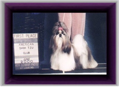 """Can/Am.Ch.Beswick's Policy and Procedures """"Polly won the BBE class at the American National 2000 and is the dam of Beswick's Consider the Sorce."""