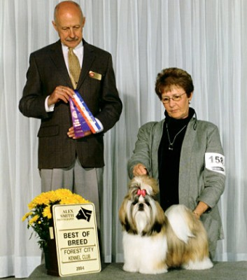 "Ch Beswick's Cinnamon Twist ""Cinnamon"" is Saryn's first champion / owned by Geri Ikola"