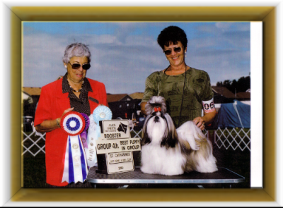 "Can/Am Ch. Lotus Just Do It Beswick/ ""Jessie"" breeder,owners Robert & Barb Denis. Although I did not breed Jessie,his pedigree is all Beswick.  I did finished him in both countries"