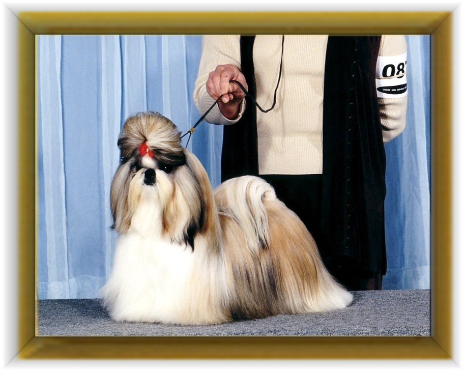 """Sophisticates Dancin at Beswick. """"Dancey"""" Bred by Lynda Torrence and Josephine Kocman Owned by : Pat Waters"""